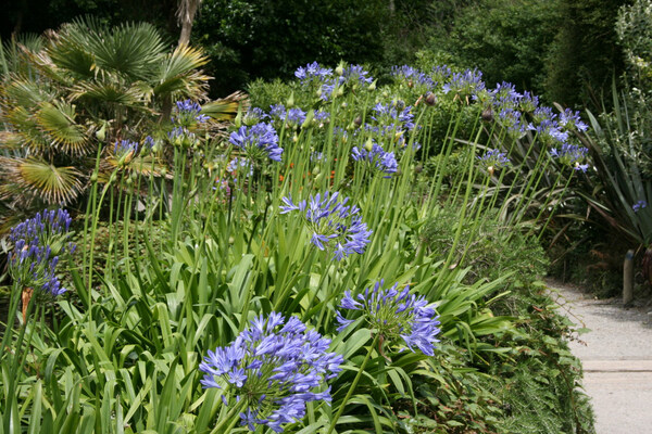 Trebah Garden, 2008