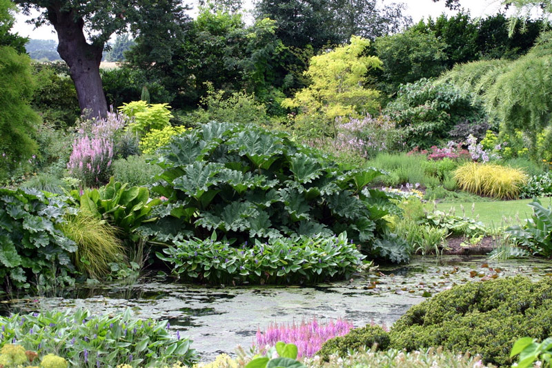 Pond, Beth Chatto Gardens