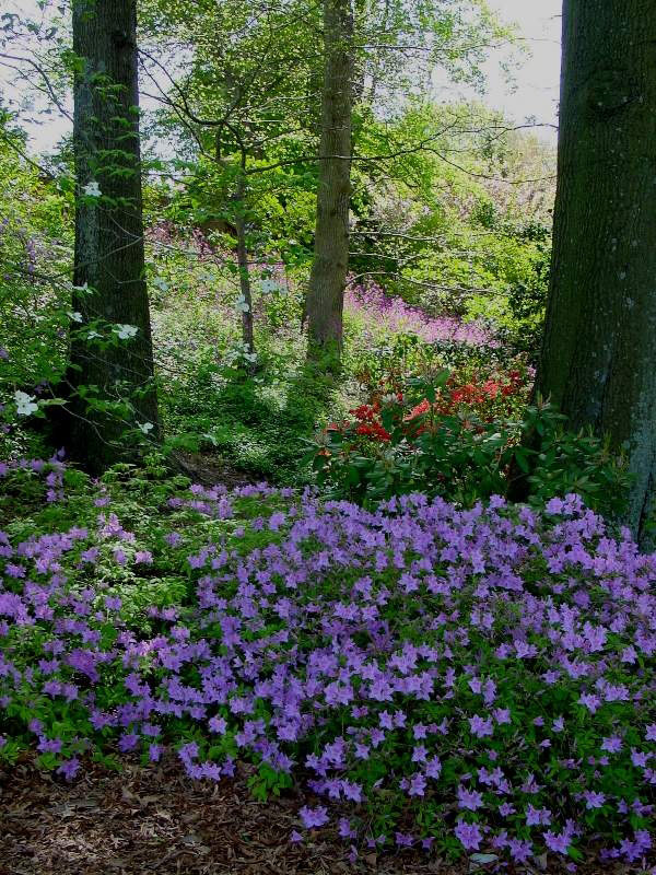 Woodland Garden, London Town Gardens