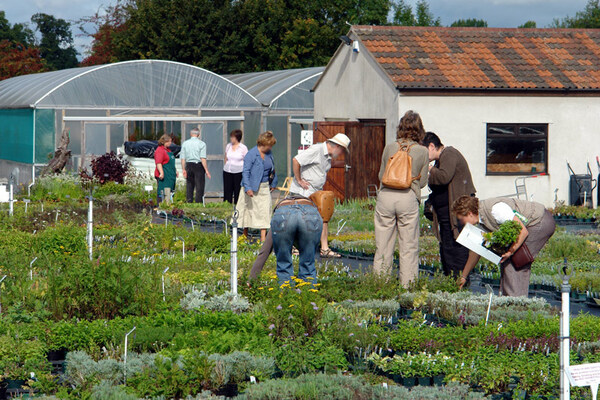 Jekka's Herb Farm, Somerset