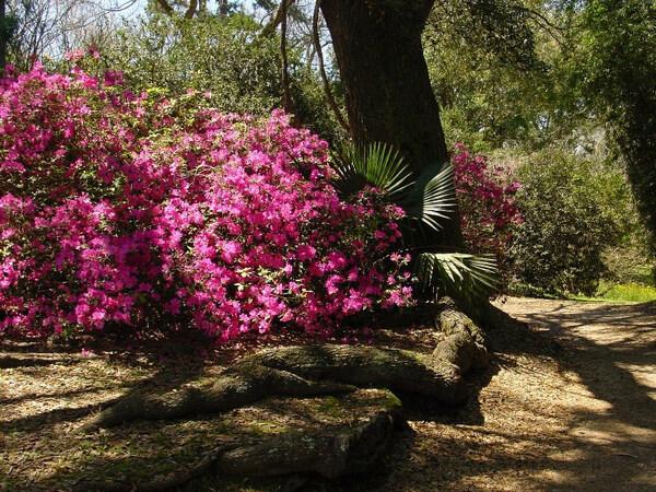 Jungle Gardens of Avery Island