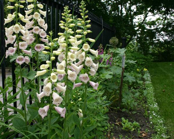 Eldon House Garden, Ontario