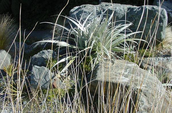 Alpine Garden, Otari-Wilton's Bush Native Botanic Garden