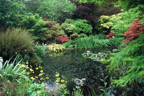 Pond, Ngamamaku Garden