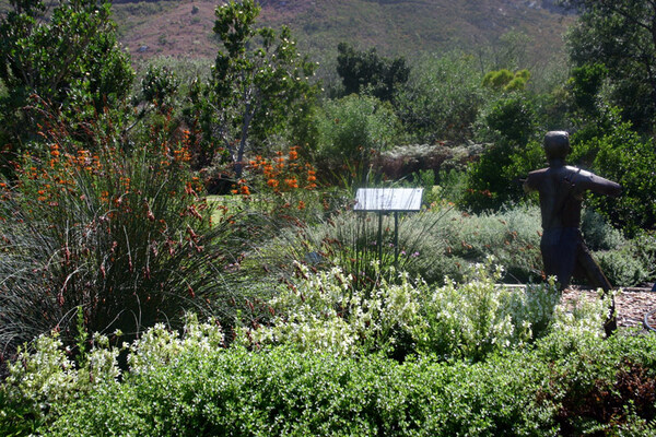 Harold Porter National Botanic Garden, Western Cape
