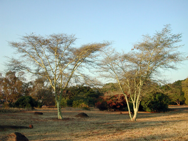 Pretoria National Botanic Garden, South Africa