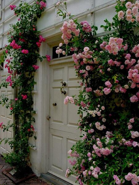 Roses, Wyck Garden