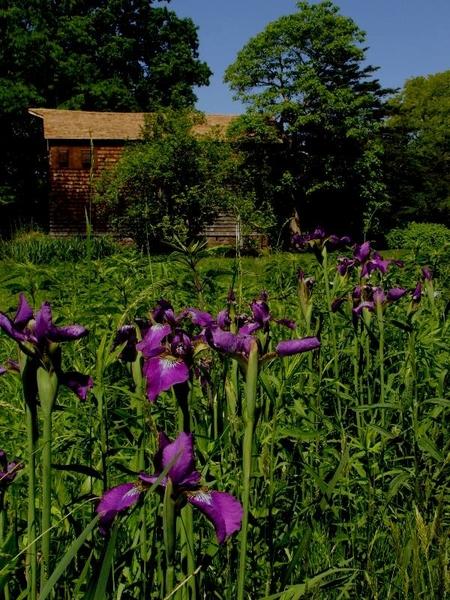 Willowwood Arboretum, NJ
