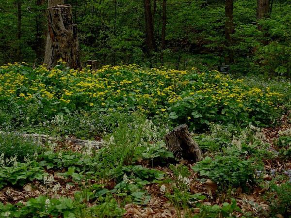 Winkler Botanical Preserve