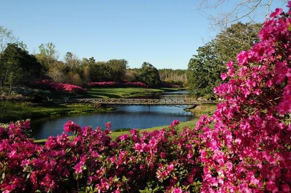 Azaleas, Bellingrath Gardens