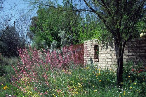 Tucson Botanical Gardens, Arizona