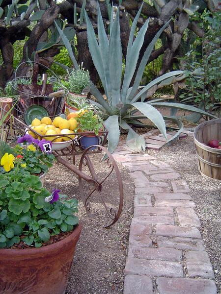 Tucson Botanical Gardens, USA