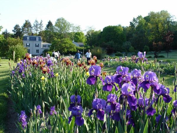 Presby Iris Gardens