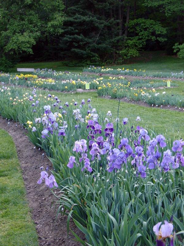 Charmant Presby Iris Gardens, New Jersey