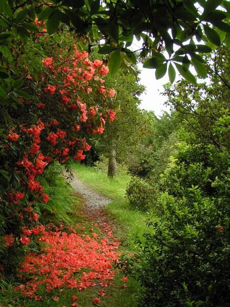 Glenarn Garden, Scotland