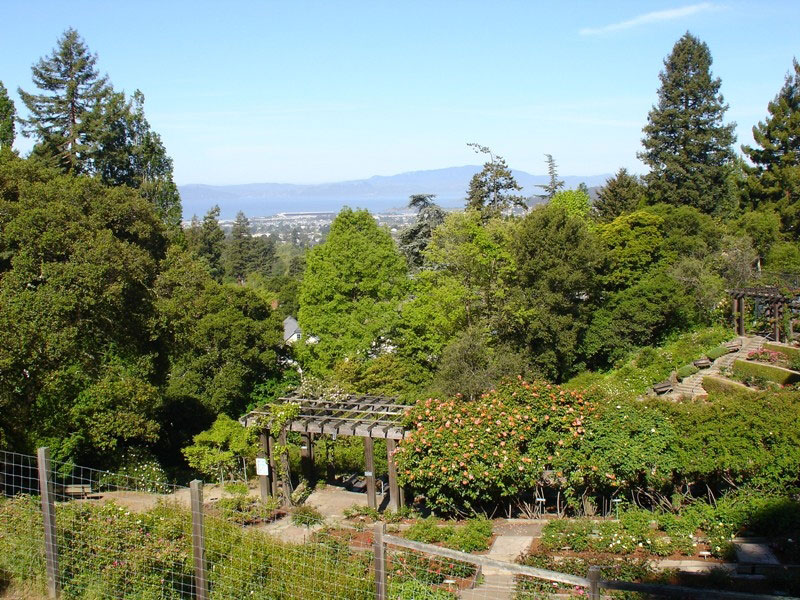 View, Berkeley Rose Garden