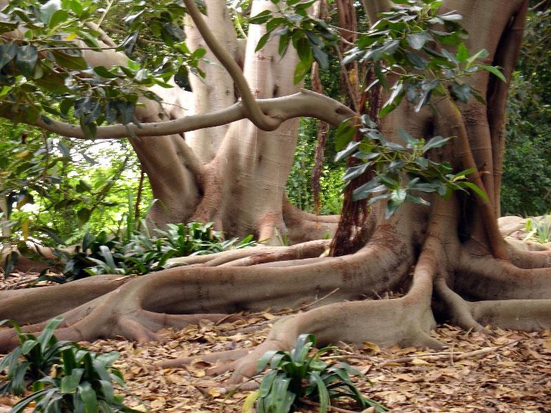 Trees, South Coast Botanic Garden