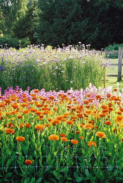 Cutflower Garden, Easton Walled Gardens