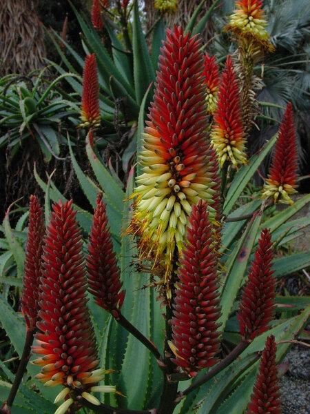 Mildred Mathias Botanical Garden
