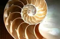 Growth patterns for Nautilus garden designs
