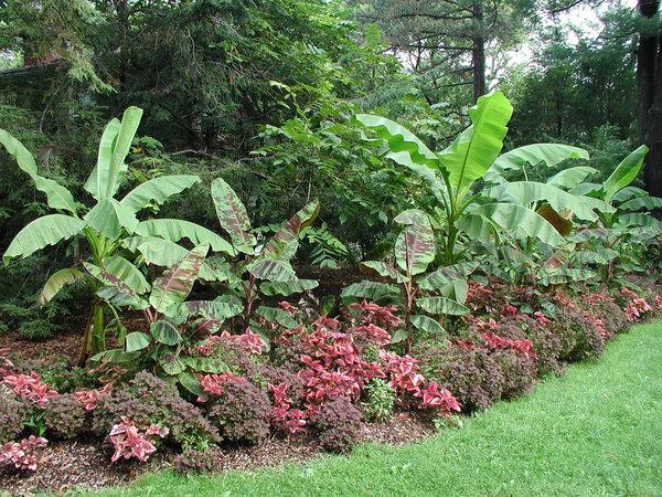 Banana Border, Bartlett Arboretum Gardens