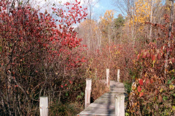 Boardwalk, Bartlett Arboretum