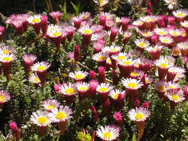 UC Berkeley Botanical Garden, California