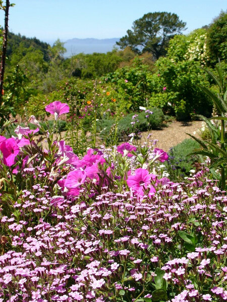 Berkeley Botanical Garden, California