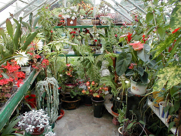 Greenhouse, Boyce's Garden