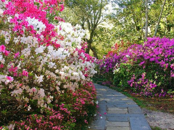 Bellingrath Gardens, Theodore