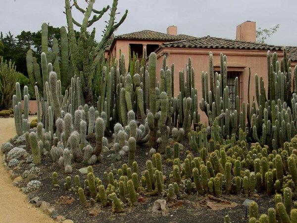 Cacti, Lotusland