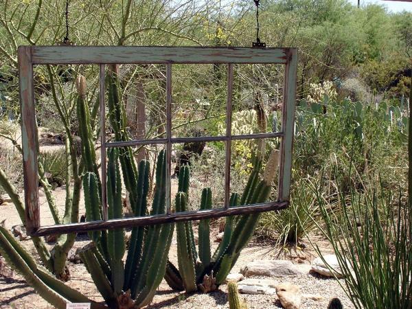 Cacti, Tucson Botanical Gardens