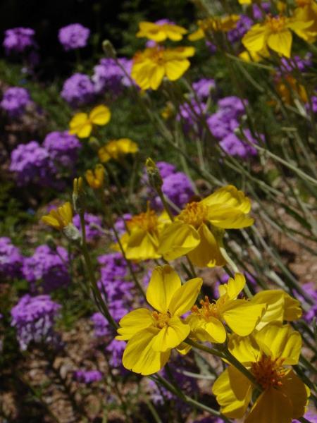 Tucson Botanical Gardens, AZ