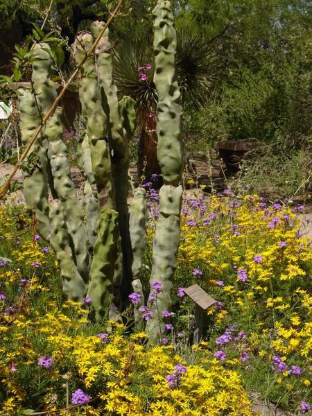 Tucson BG, Arizona
