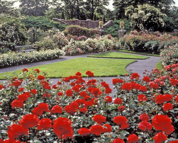 Rose Garden, New York Botanical Garden