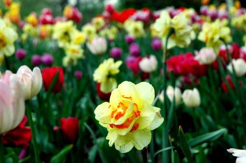 Foster Park Floral Area, Fort Wayne