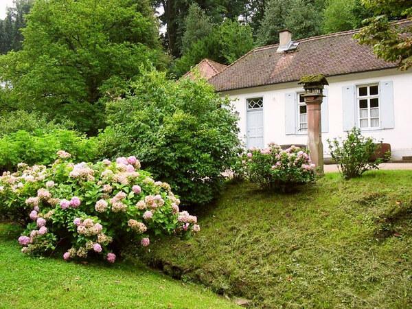 Hydrangea, Staatspark Fuerstenlager