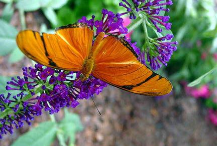 Foellinger-Freimann Botanical Conservatory, Indiana