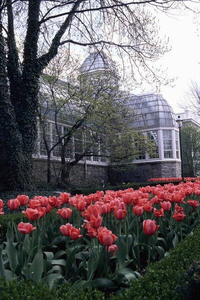 Tulips, Franklin Park Conservatory