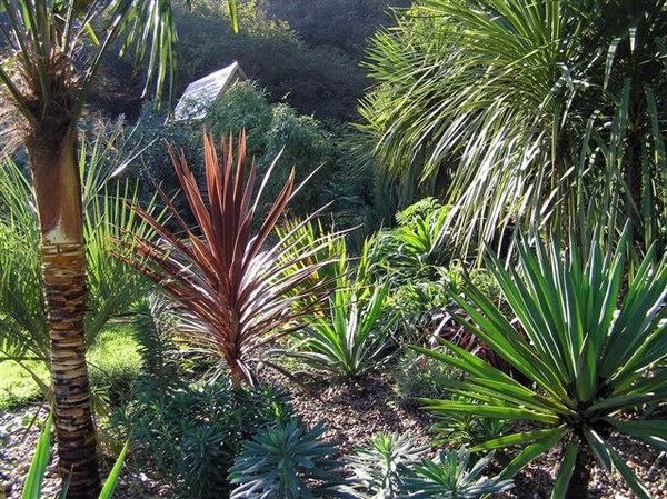 Henstead Exotic Garden, August