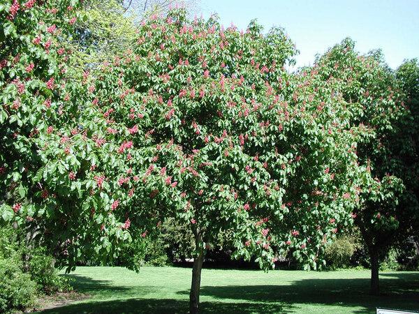 Carl S. English Jr. Botanical Garden, Washington