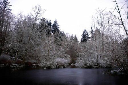 Snow, Bloedel Reserve