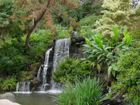 Medium los angeles arboretum waterfall original