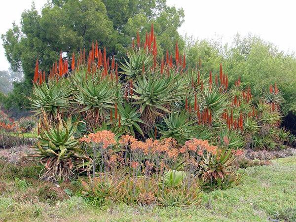 Los Angeles County Arboretum Botanic Garden