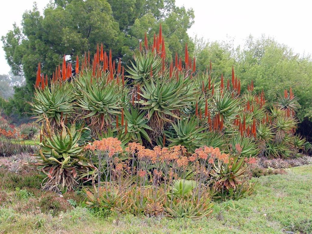 Los Angeles County Arboretum, California