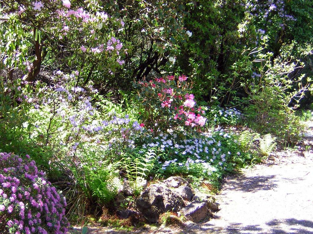 lovely berry garden Part - 1: lovely berry garden pictures gallery