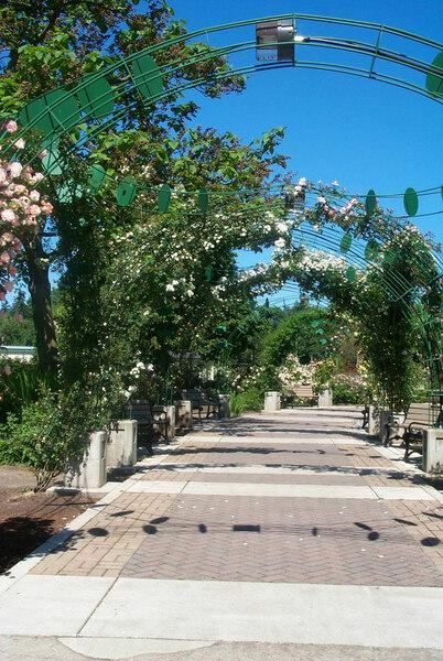 Pergola, Owen Rose Garden