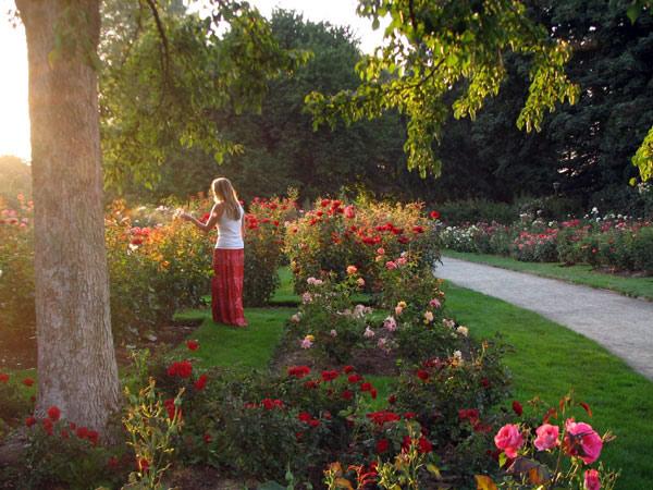 Owen Rose Garden, Oregon