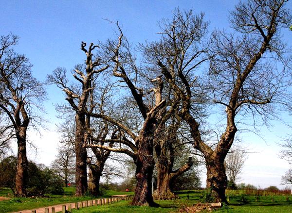 Stockwood Park Vince