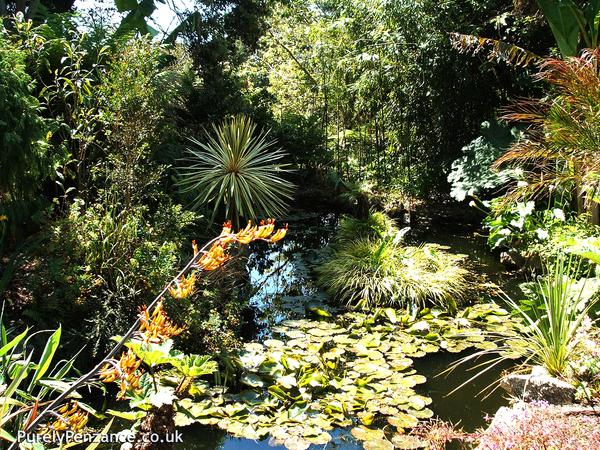 Morab Subtropical Garden Purely Penzance